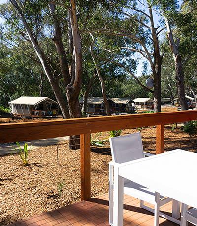 koala sanctuary port stephens accommodation